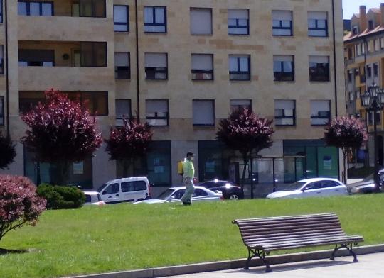 Fumigando en Oviedo con el parque lleno de niños